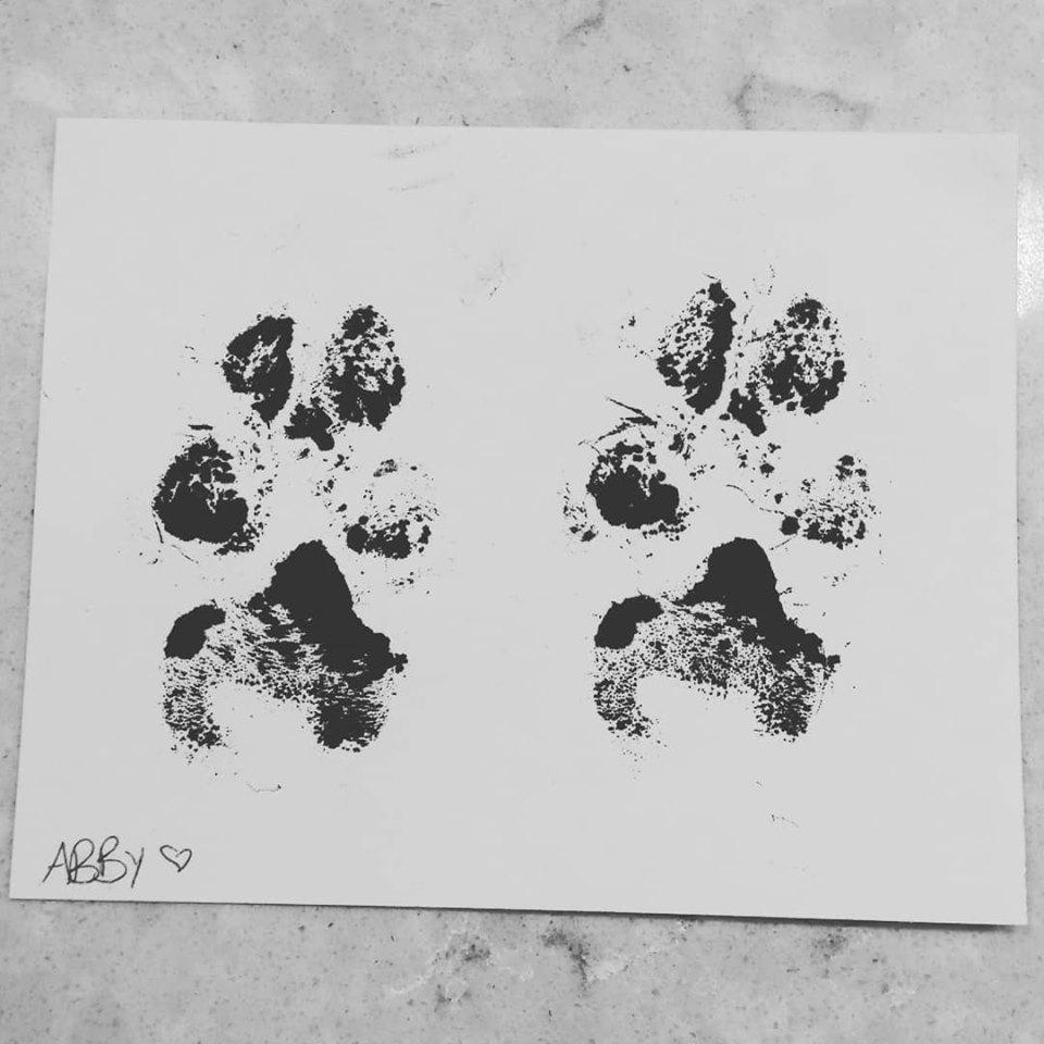 Abby Paw Prints